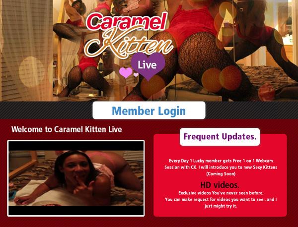 Working Caramel Kitten Live Account